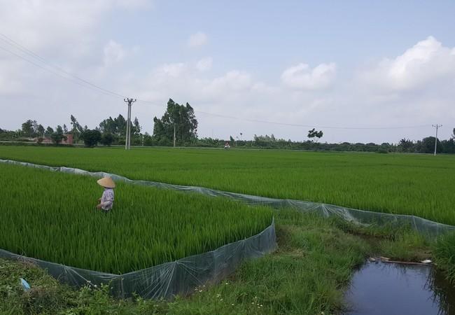 Ruộng đất được phân chia bình quân là đặc trưng của quản lý đất đai tại nông thôn Việt Nam. Ảnh: Quốc Dũng.