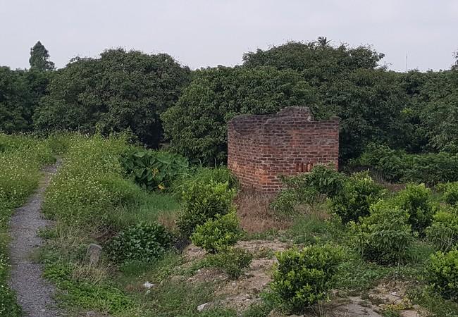 Một vườn vải ở thôn Đông Phan, xã Tân An, huyện Thanh Hà, Hải Dương đang bỏ hoang sau 2 năm liên tiếp được mùa, mất giá, chủ vườn bỏ đi làm nhà máy da giày. Ảnh: Quốc Dũng
