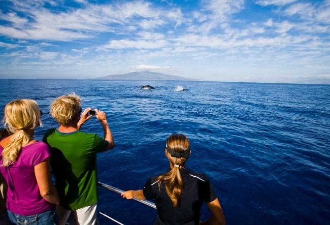 Ngắm cá voi trên biển Hawaii - Ảnh: wordpress