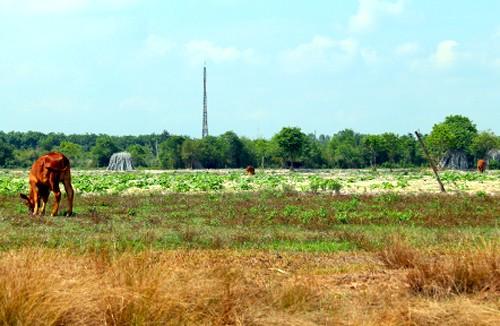 Hàng trăm ha đất ở xã An Nhơn Tây, huyện Củ Chiđã được giải tỏa đểthực hiện dự án Công viên Sài Gòn Safaribị bỏ hoàng suốt cả chục năm qua khiến người dân rất bức xúc. Ảnh: Trung Sơn.