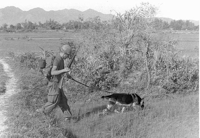 Lính Mỹ đi càn cũng với chó nghiệp vụ ở Miền Nam Việt Nam