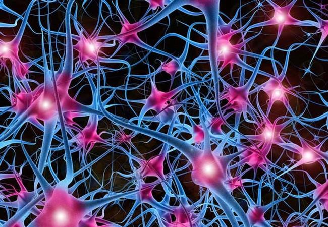 Cấu trúc mạng thần kinh. Ảnh: Seeker